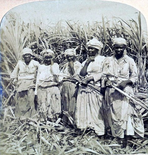 Sugar cane workers in Montego bay