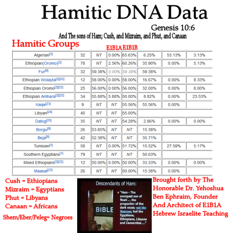 Hamitic+DNA+Data