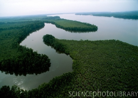Niger Delta, aerial photograph