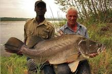 killer-fish-nile-perch-pictures0